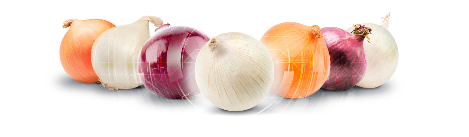 Onion Sorting, Grading, Packing and Processing Machines